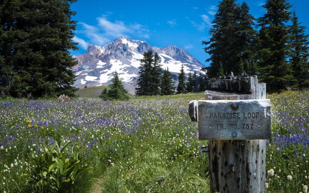 paradise loop trail sign, mt. hood, oregon cascades