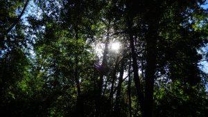 Environmental Issues - Managing Oregon's forests @ Loucks Auditorium | Salem | Oregon | United States
