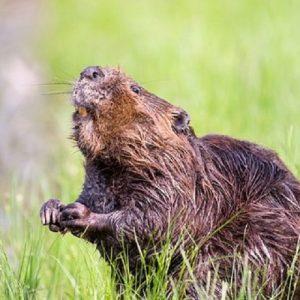 Wildlife of Oregon @ Straub Environmental Learning Center | Salem | Oregon | United States
