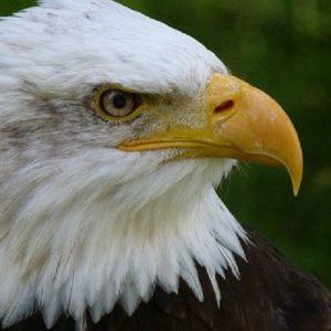 Birds of Oregon @ Straub Environmental Learning Center | Salem | Oregon | United States