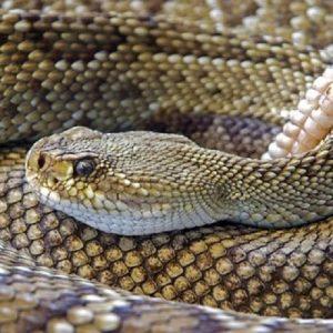 Reptiles and Amphibians of Oregon @ Straub Environmental Learning Center | Salem | Oregon | United States